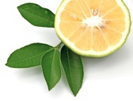 AYGET Shea Nut Oil Bergamot | Are You Going to Eat That?